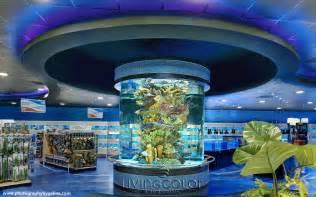 Tropical Fish Tank   Tropical Fish AquaristTropical Fish Aquarist