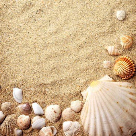 Fliesenaufkleber Muscheln by Fliesenaufkleber Motiv Muscheln Im Sand 20x20 Cm