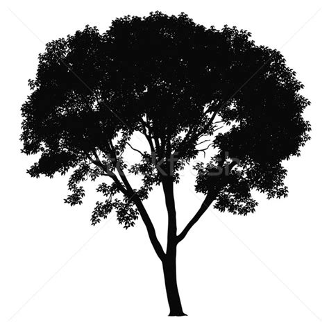 trees silhouettes stock illustration image of color 43384093 tree silhouette vector illustration 169 bogusław mazur aiel 282863 stockfresh