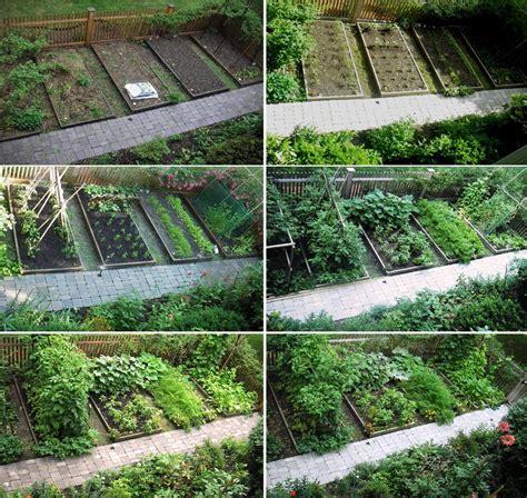 skippy s vegetable garden city farmer news