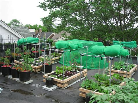 Rooftop Vegetable Garden Ideas Rooftop Vegetable Garden Ideas Images And Photos Objects Hit Interiors