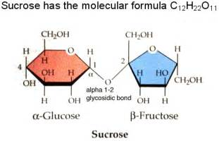 glucose motm 2007 vrml only version
