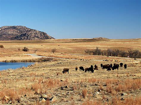 Lawton Ok Search File Wichita Mountains Buffalo Near Lawton Oklahoma 5337960248 Jpg Wikimedia