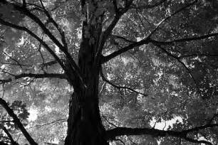 black and white trees new calendar template site