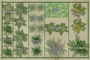 Herb Garden Layouts Vegetable Garden Layout Template Culinary Herb Garden Plan Template Gardening That I