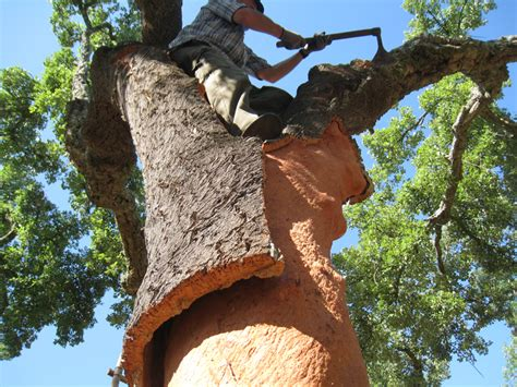 trees in cork cork floor coverings flooring associates