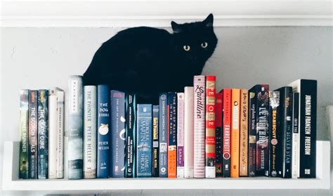 Cat And Books cat black cat bookshelves pbb cats and books books and