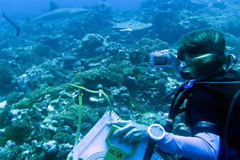 marine biologist www imgkid the image kid has it