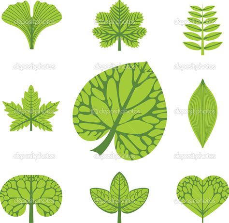 leaf pattern names depositphotos 11389525 different types of leaves vector