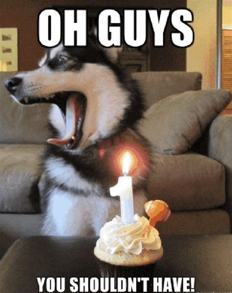 Puppy Birthday Meme - funny happy birthday dog meme