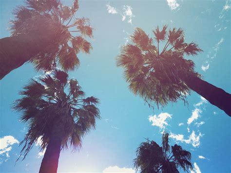 summer vibes palm trees hd good vibes wallpaper wallpapersafari