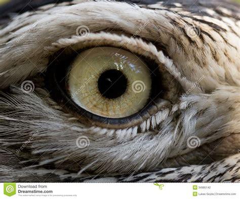 bird eye stock photography image 34985142