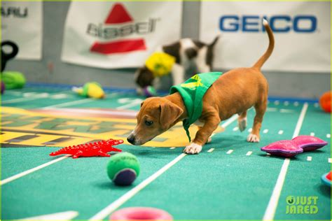 what is the puppy bowl sized photo of what is the puppy bowl 56 photo 3853451 just jared