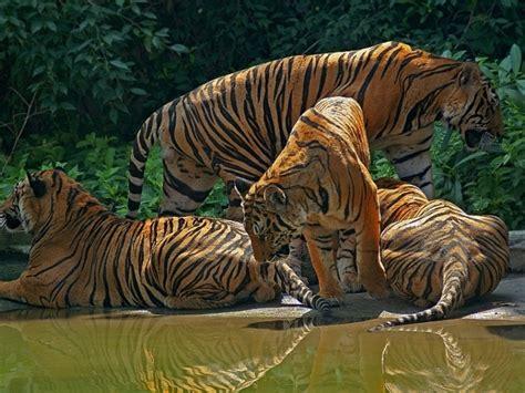 los mejores dibujos de animales los mejores animales del mundo
