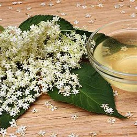 fiori di sambuco tisana ricette come preparare una tisana al sambuco sambuco