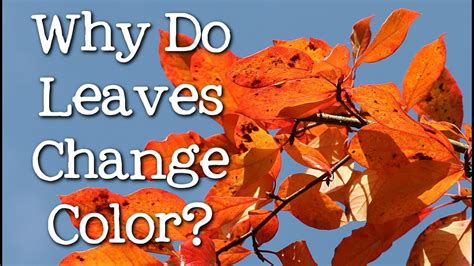 why do leaves change colors why do leaves change color in the fall
