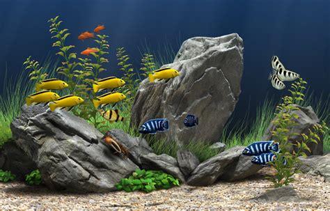 Aquascape Malaysia 6 Tips To Maintain Healthy Freshwater Aquarium Plants