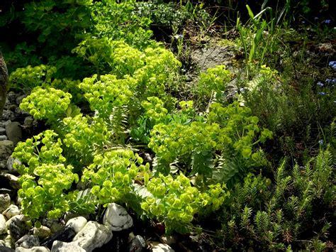 Und Stauden 3939 by Steingartenstauden Niedrige Meine Gartengestaltung