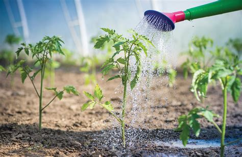 Maintaining And Monitoring The Garden Farm To Institution How Often To Water Vegetable Garden