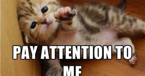Attention Meme - pay attention to me meme google search lookies