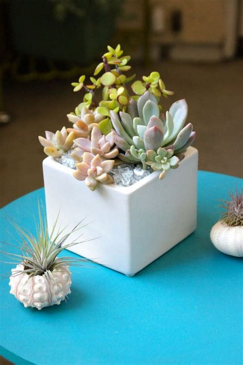 cute tiny succulent planters    instantly fall