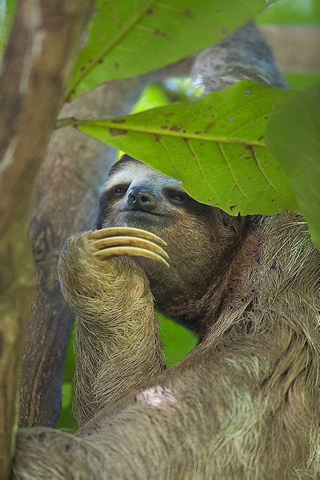 beats sloth love