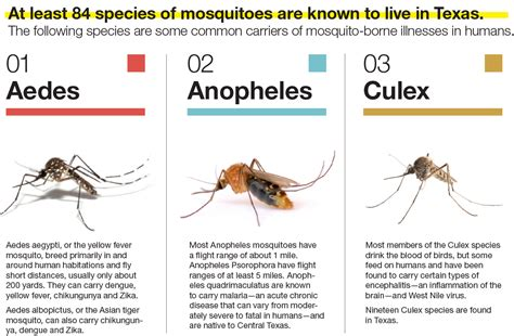 mosquito threats in central texas community impact newspaper