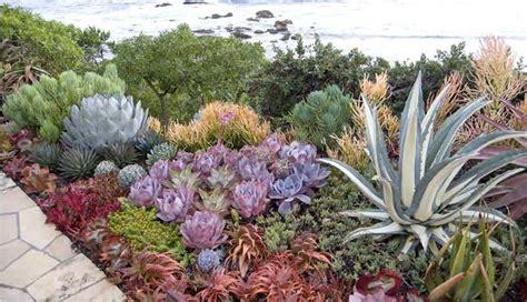 come fare un giardino di piante grasse giardino di piante grasse piante grasse creare un