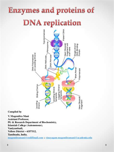 7 proteins involved in dna replication enzymes involved in dna replication pictures to pin on