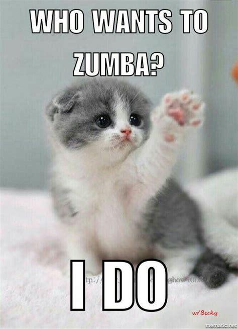 Cat Gym Meme - pin by zumba love on we love zumba memes pinterest