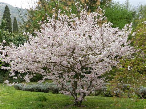 giardini ninfa orari il giardino di ninfa apertura straordinaria cisterna di
