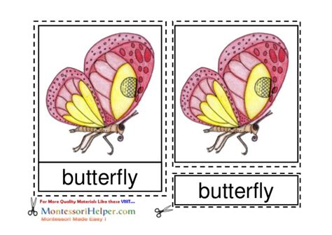 Template For Montessori Nomenclature Cards by Montessori Butterfly Nomenclature Cards Ages 6 To 9