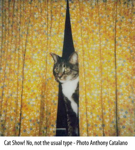 cat curtains cat curtains