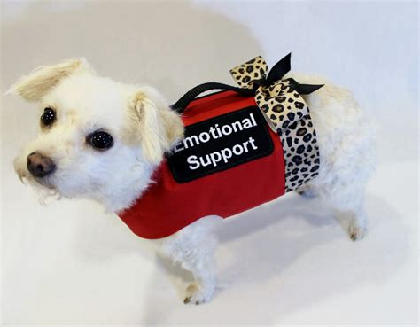 fair housing act emotional support animal guidelines for emotional support animals in wi rental properties