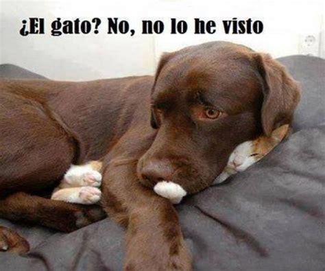 im 225 genes de perros y gatos graciosas para el whatsapp chistes imagenes graciosas de animales mejor conjunto de