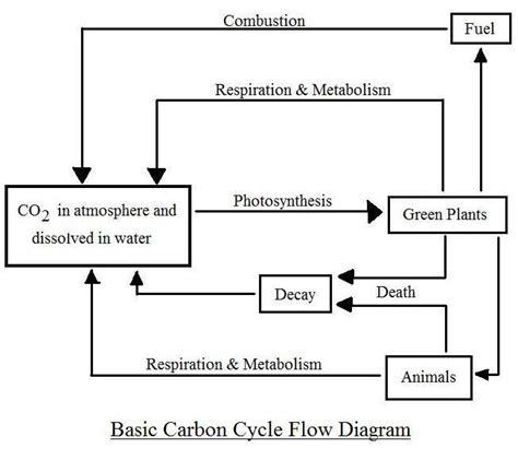 flow diagram of carbon cycle simple carbon cycle diagram groene en duurzame chemie