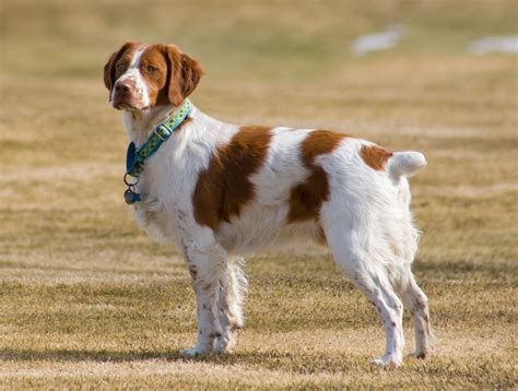about breeds breed guide learn about the