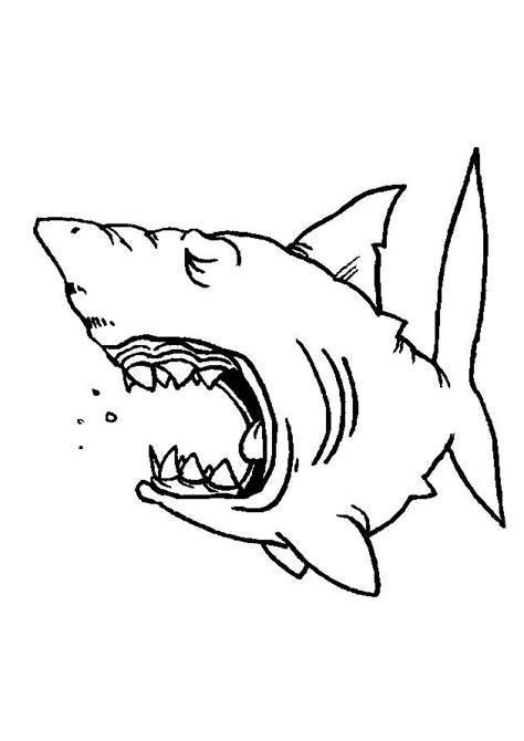 shark face coloring page coloring pages sharks picture 5