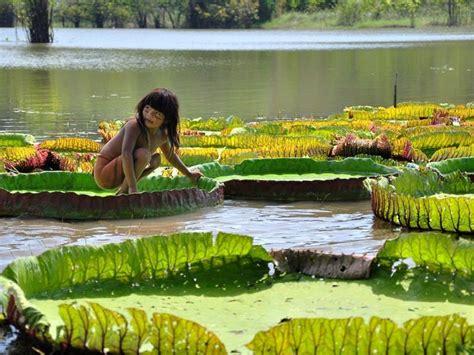 amazonia si鑒e social vit 243 ria r 233 no jardim bot 226 nico flores cultura mix