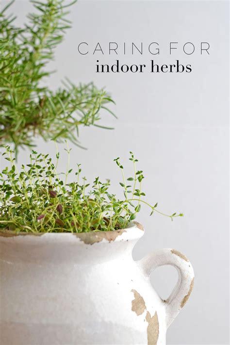 indoor herbs 25 best ideas about indoor herbs on pinterest herb garden indoor diy herb garden and growing