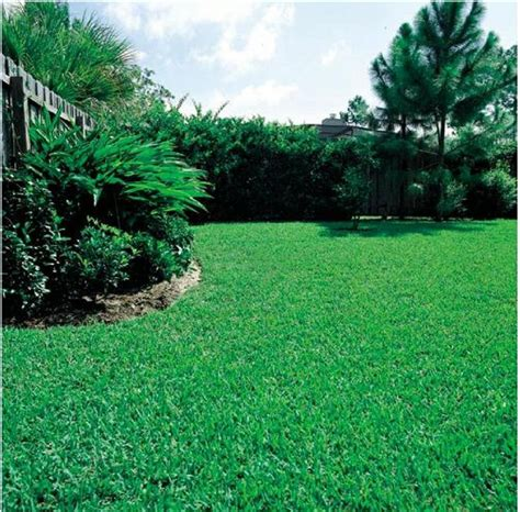 how to grow grass on poor soil