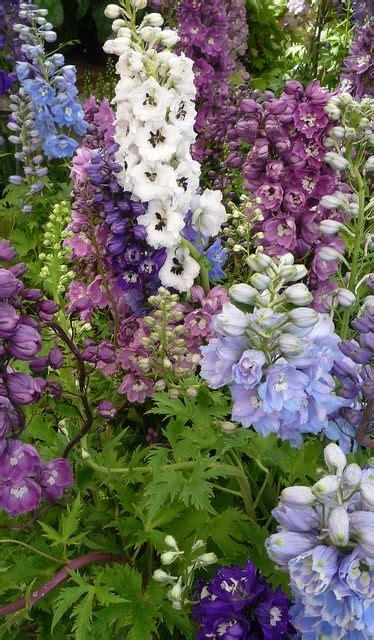 white cottage garden flowers best 25 cottage gardens ideas on