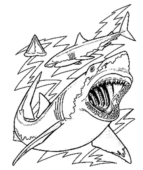 sharks a coloring book books free coloring page sharks of the world coloring book