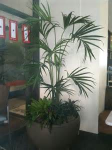 Home Decor Artificial Trees by Artificial Trees And Artificial Plants From Artificial