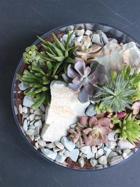 Indoor Modern Planters how to make a tabletop succulent terrarium diy network