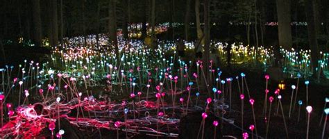 Longwood Gardens Light Show by Longwood Gardens Light Show Landscaping