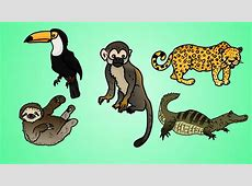 Draw Five: How to Draw Jungle Animals - YouTube Flying Pig Drawing
