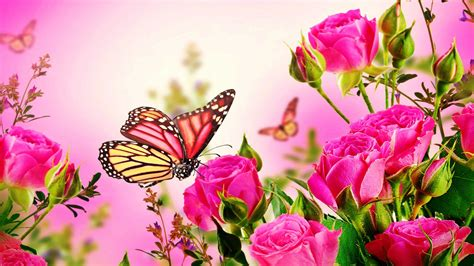 wallpaper flower and butterfly pink rose butterfly wallpaper of pink roses flowers