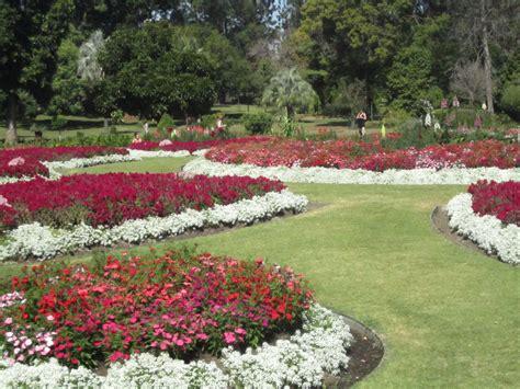 garten zierpflanze ornamental gardens