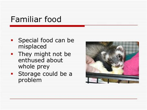 my wont eat or drink and is lethargic nursing care of post surgical sick and debilitated ferrets
